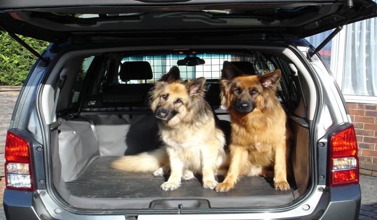 Cómo llevar a un perro en coche