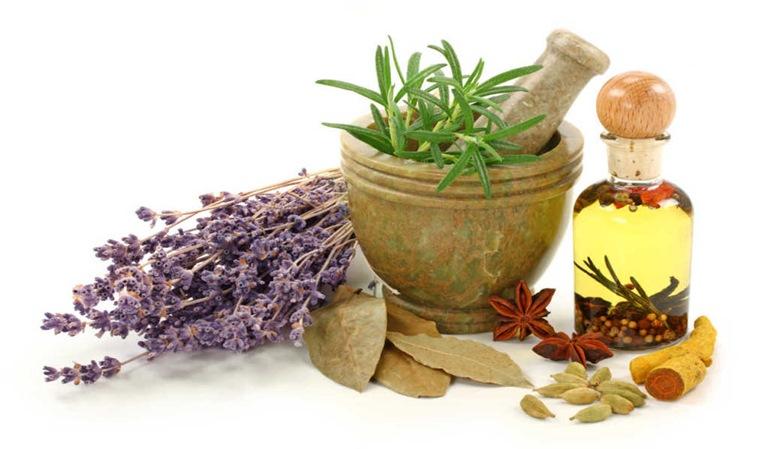 Las plantas medicinales y la conducción