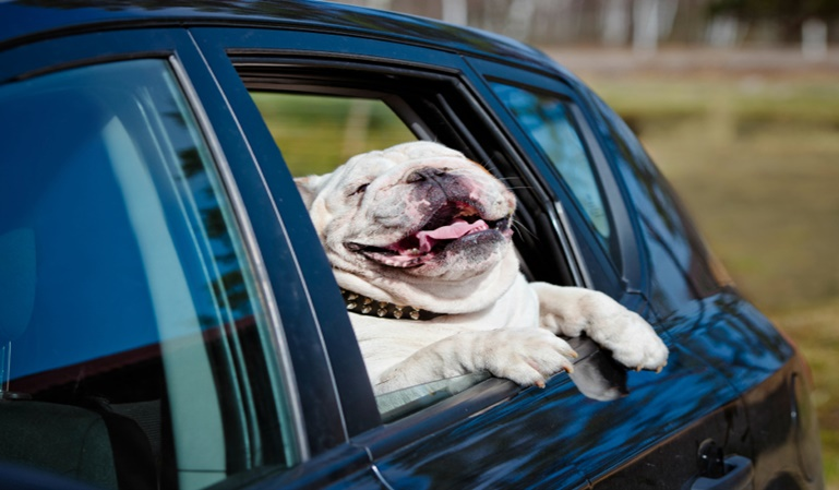 Viaja con tu mascota en el coche sin ser multado