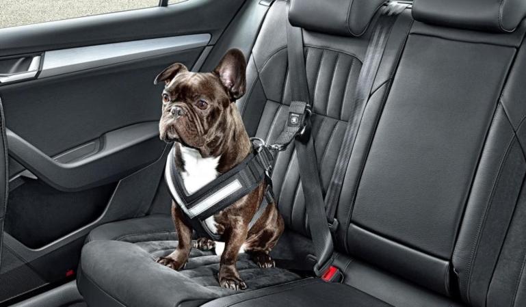 ¿Cómo debo de llevar mi mascota en los viajes en coche?