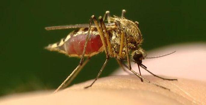 Los nuevos controles en coches contra el mosquito tigre